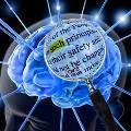 Учёные научились читать чужие мысли