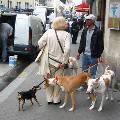 Французы придумали, как избавить тротуары от собачьих фекалий