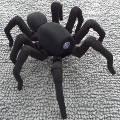 В Гонконге на 3D-принтере напечатали реалистичного «танцующего» паука
