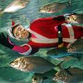Подводный Санта-Клаус объявился в Мексике и в Японии