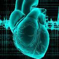 Ученые планируют печатать живое сердце на 3D-принтере