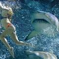 Россияне раскупают приборы для отпугивания акул