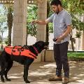 Виброжилет позволит дистанционно управлять любой собакой