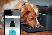 Pintofeed – электрическая кормушка для домашних животных. Доверь уход за собакой смартфону