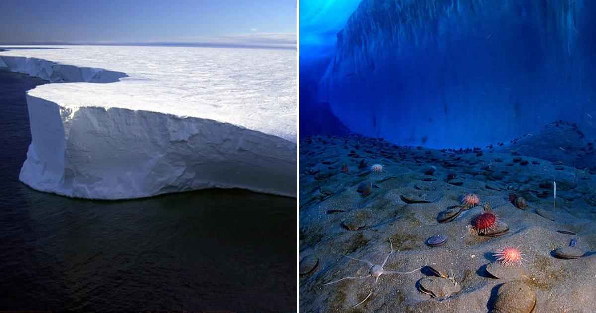 Первое видео подледного мира Антарктики, снятое роботизированным зондом-субмариной