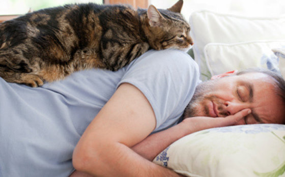 Правильный образ жизни кошки