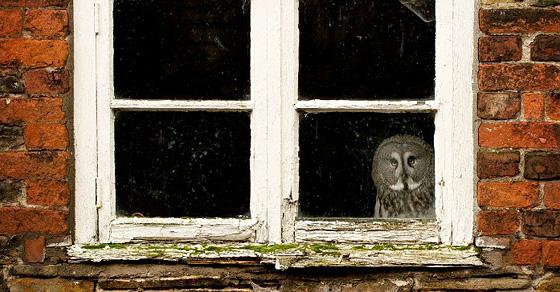 А из нашего окна...»: 17 забавных, странных и шокирующих видов из окон