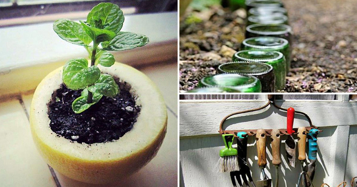 19 бюджетных хитростей по уходу за растениями и обустройству дачного участка