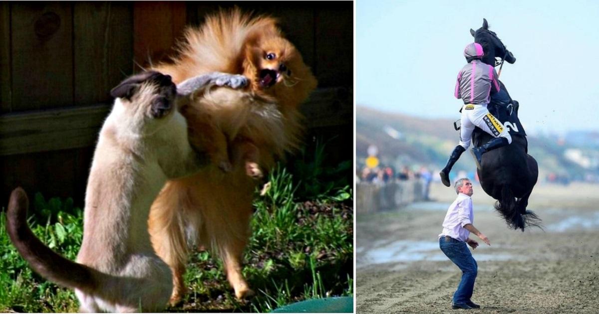 17 забавных снимков, сделанных в самый подходящий момент