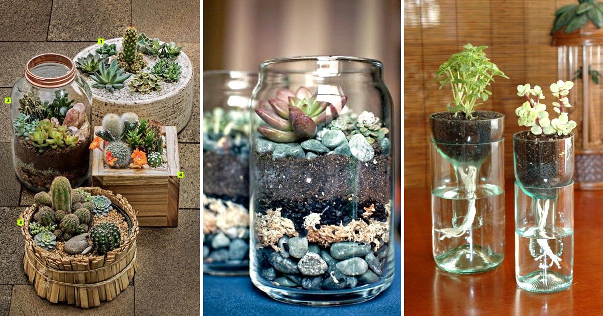 20 домашних мини-садов, которые несложно создать собственноручно