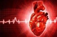 10 малоизвестных фактов о человеческом сердце для всех, кто заботится о своём здоровье