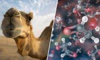 Наука и техника: 15 фактов, в которые трудно поверить, но которые являются чистой правдой