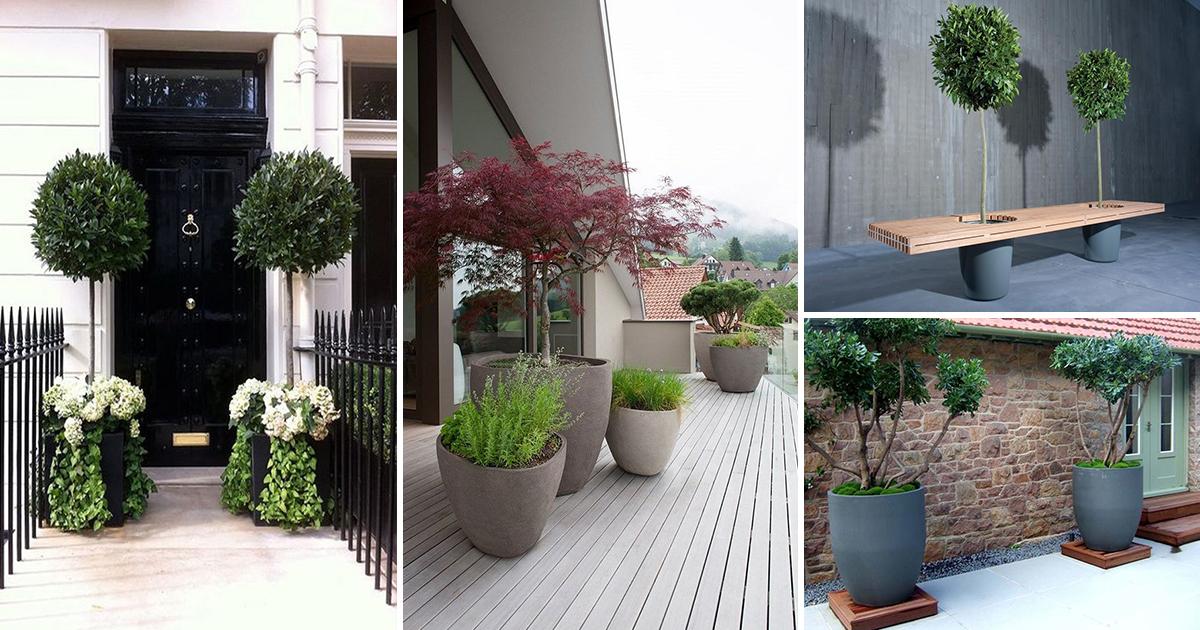 Какие деревья можно посадить дома в горшке