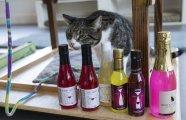«Тяпнем по мяу-ленькой?»: в продажу поступили первые алкогольные напитки для домашних животных