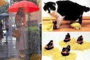 Лайфхак: 15 глупых изобретений, которые имеют ошеломляющую популярность