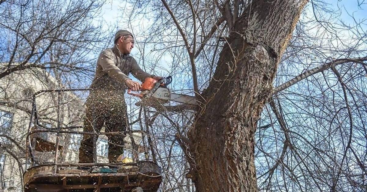 Как незаметно уничтожить дерево или засушить на корню видео    Как уничтожить дерево на участке