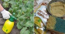 Лайфхак: 12 способов использования горчичного порошка, который пригодится не только на кухне