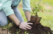 Лайфхак: Простой и проверенный способ получить саженец любого дерева