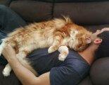 Общество: Почему многие коты предпочитают спать, умостившись на человека сверху